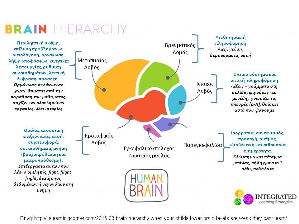 Εγκεφαλική Ιεραρχία: Όταν τα κατώτερα επίπεδα του εγκεφάλου του παιδιού σας είναι δυσλειτουργικά, επηρεάζεται η μάθηση.